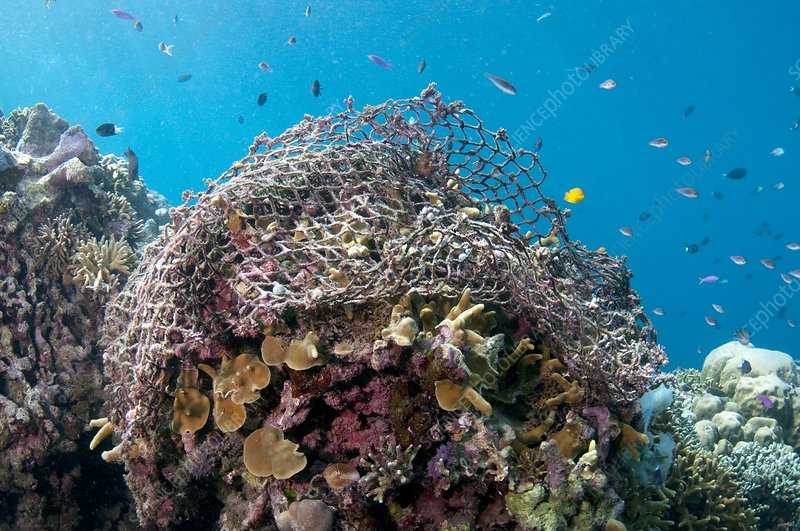 Discarded fishing net on a reef