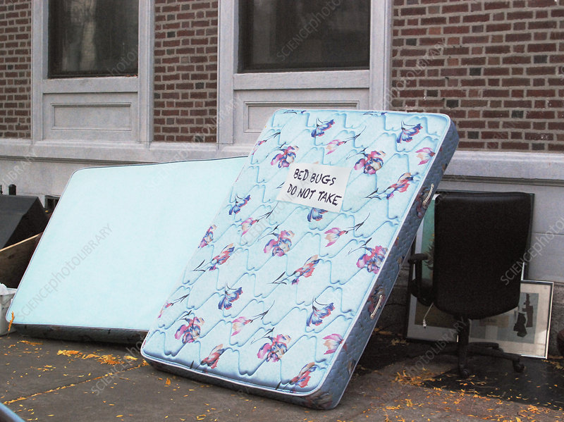 Mattress with bed bug sign
