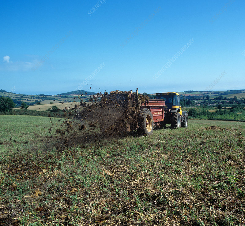 Tractor spreading manure