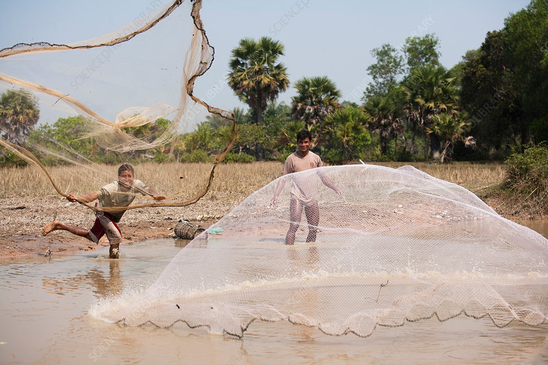 Fishing with Net, Cambodia