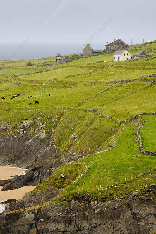 Farm, Slea Head, Ireland