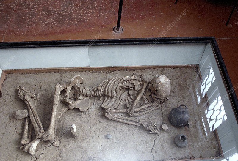 Skeleton excavated at Tanais site