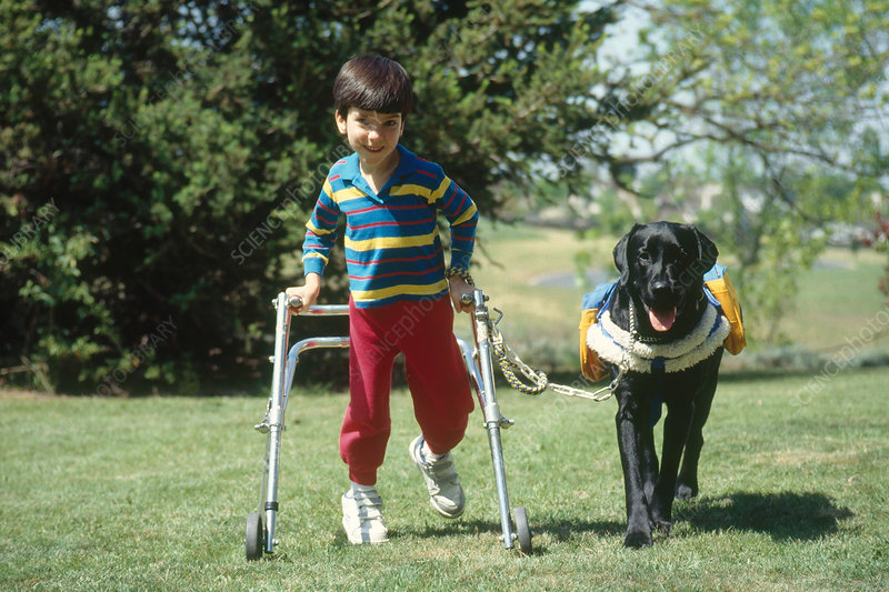 Aide Dog and Disabled Child
