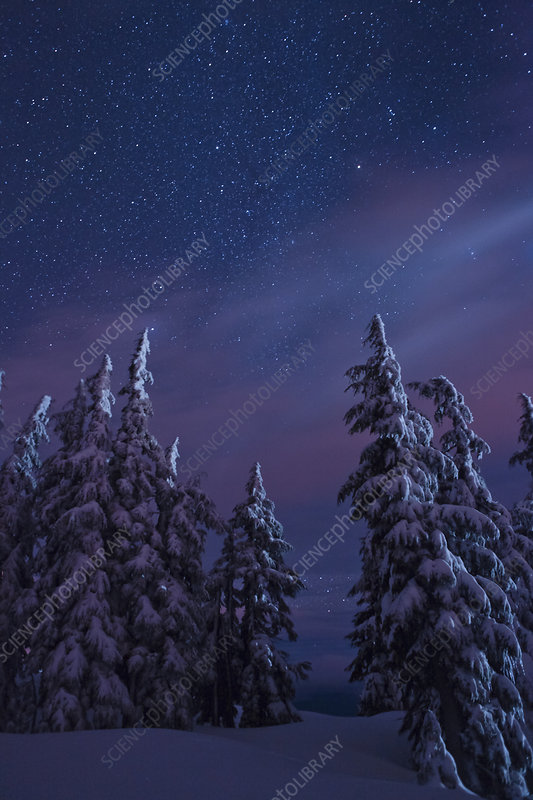 Snow-covered Forest and Starry Sky