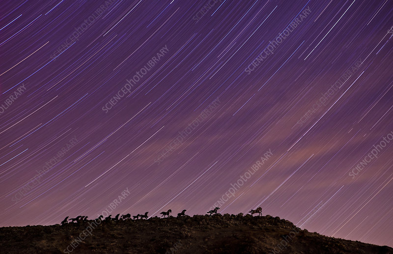 Wild Horses Monument and Star Trails