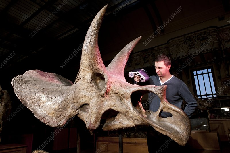 Triceratops fossil, 3D scanning