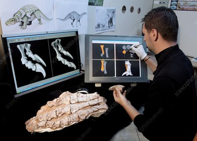 Dinosaur research, 3D imaging
