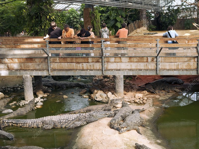 Visitors at a crocodile farm