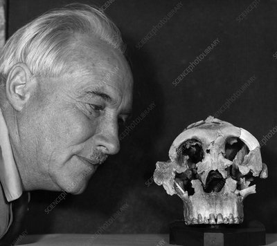 Dr. Louis Leaky with Zinjanthropus Skull