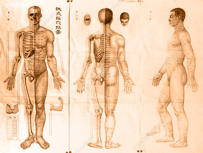 Japanese Acupunctural Chart