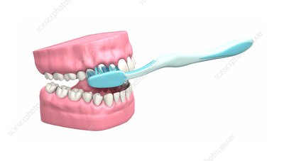 Tooth brushing technique