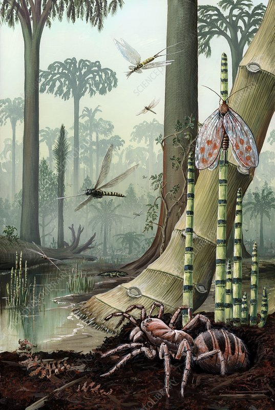 Carboniferous Insects And Swamp Plants Stock Image C0131013