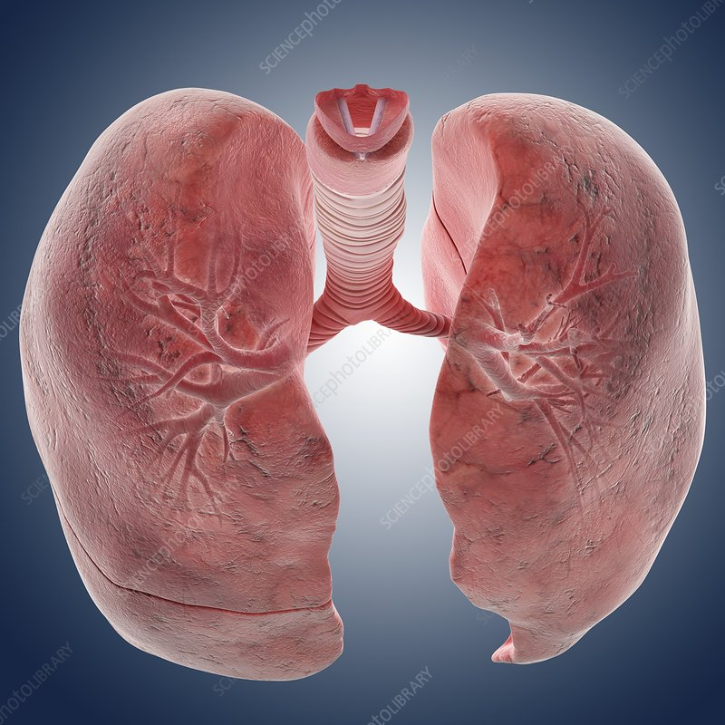 Lungs, artwork