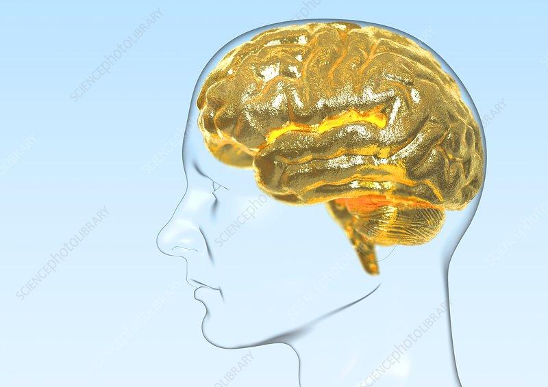 Intelligence, conceptual artwork