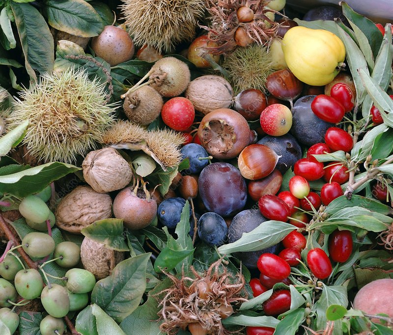 Harvested autumn fruits and nuts