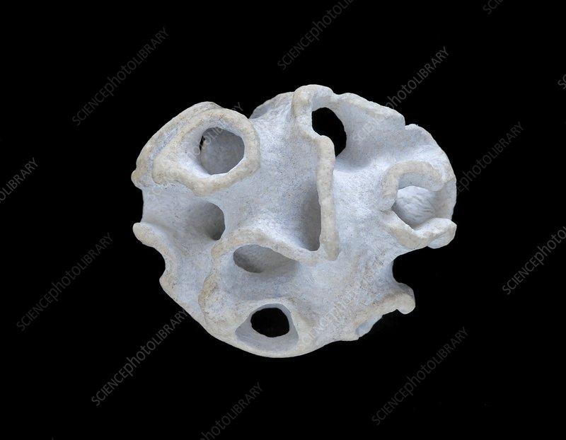 Sponge fossil