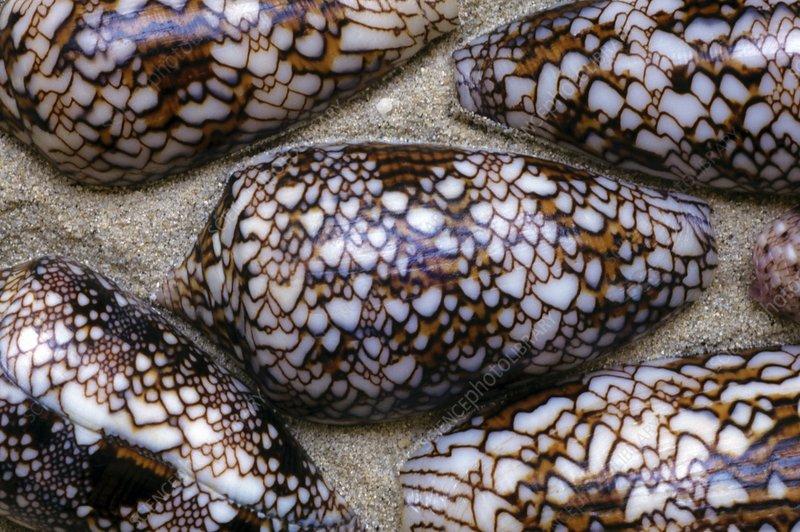 Textile cone shells