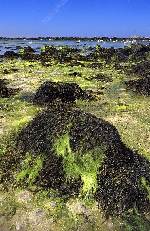 Seaweed-covered coast