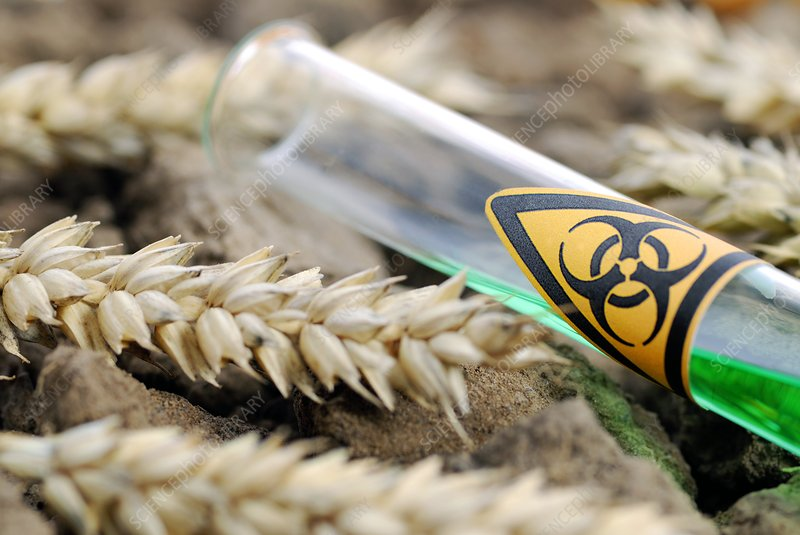 Dangers of genetically engineered crops