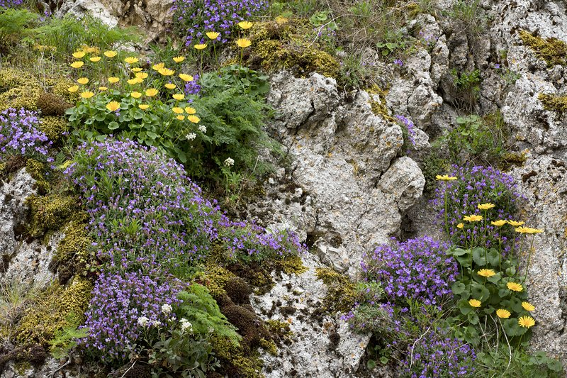 Limestone cliff with wildflowers