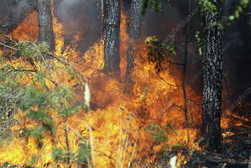 Photo library caption forest fire flames spreading through a forest