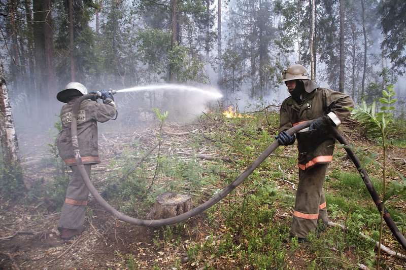 Firefighters dousing a forest fire