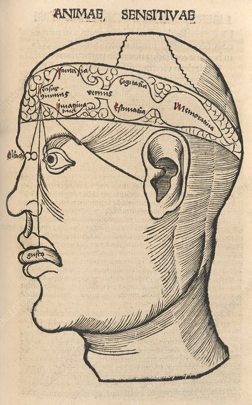 Senses within the brain, 16th century