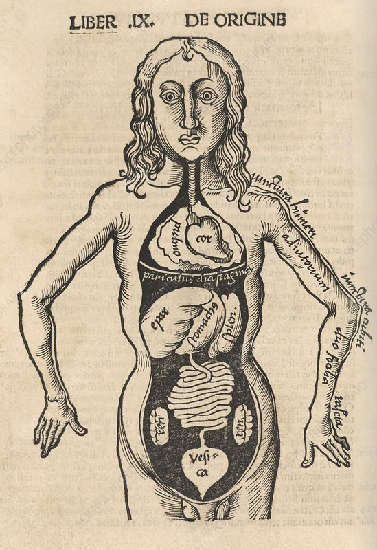 Anatomical dissection, 16th century
