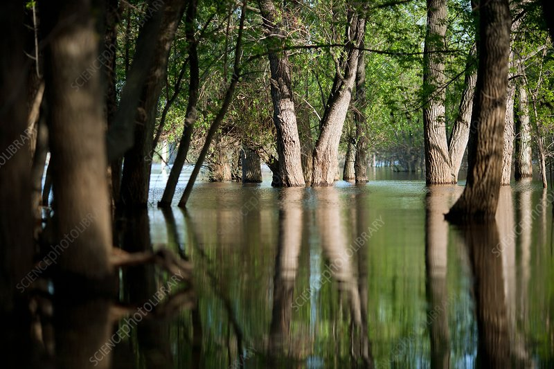 Flooded woodland, Russia