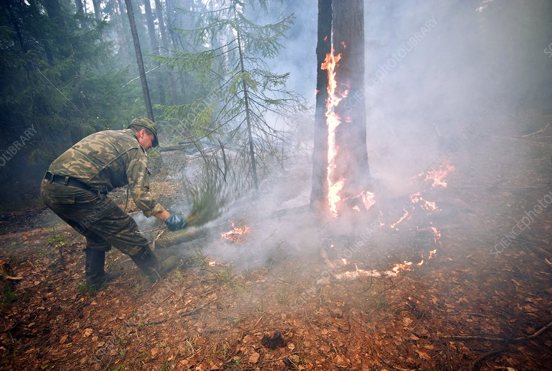 Forest fire management