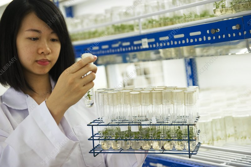 Plant researcher, Malaysia