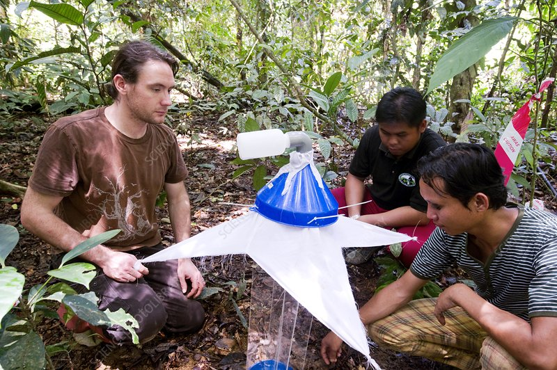 Researchers collecting insects, Borneo