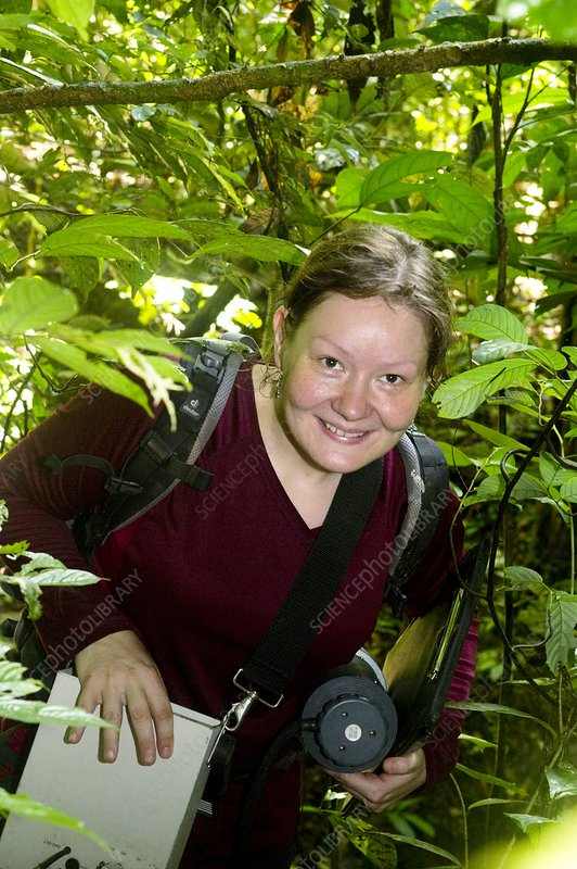 Rainforest researcher, Borneo