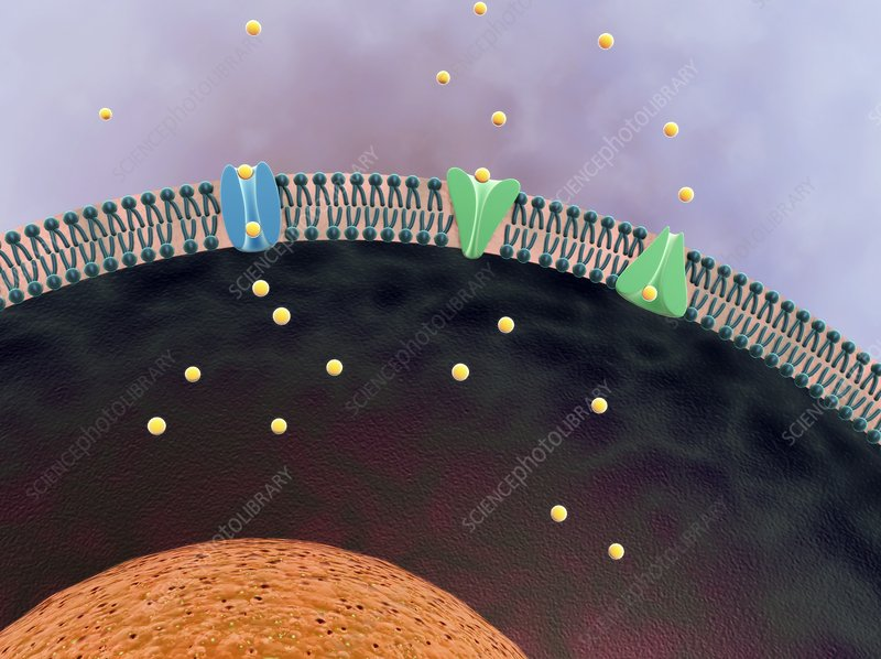 Cell membrane, artwork