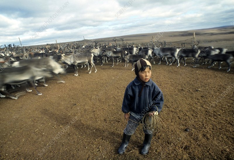 Reindeer herder, Russia