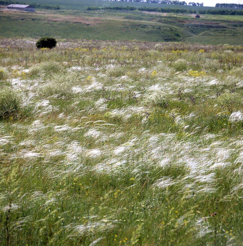Steppe grassland