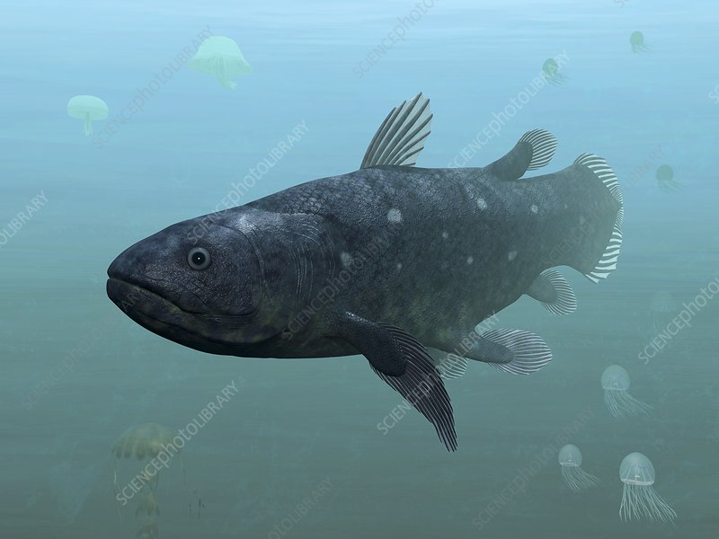 Coelacanth fish, artwork