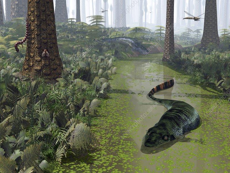 Eogyrinus prehistoric amphibians, artwork