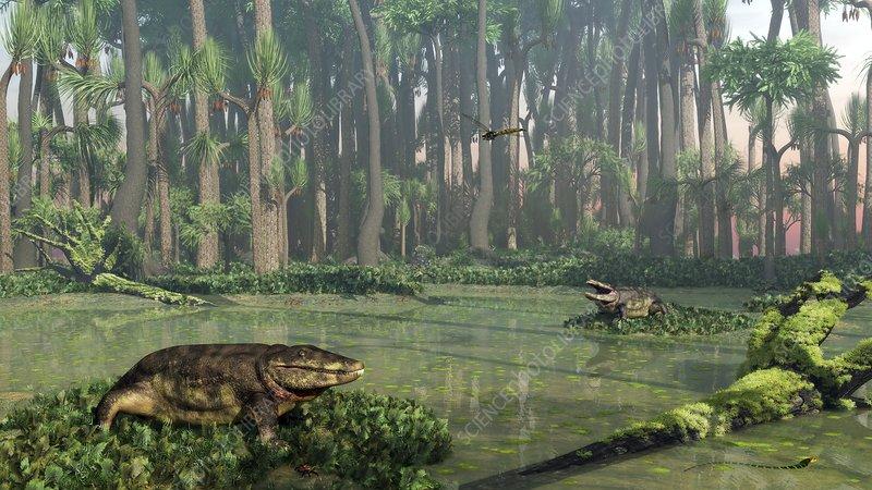 Eryops prehistoric amphibians, artwork