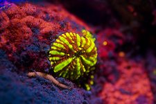 Coral and algae fluorescing