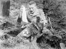 British Military first aid dog