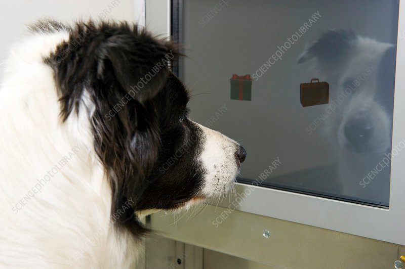 Dog intelligence research