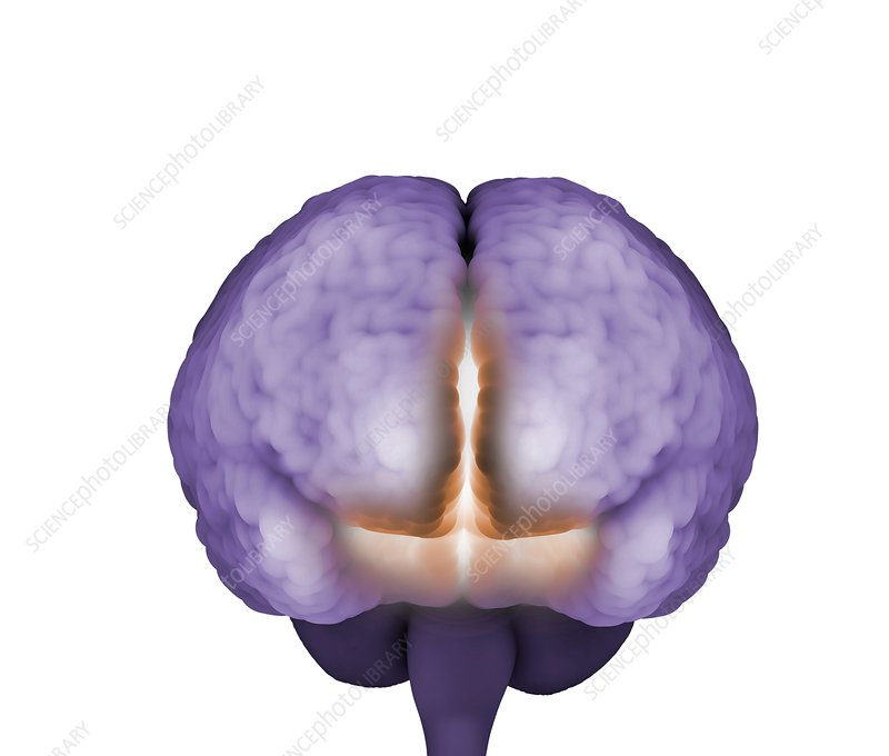 Psychic brain, conceptual image