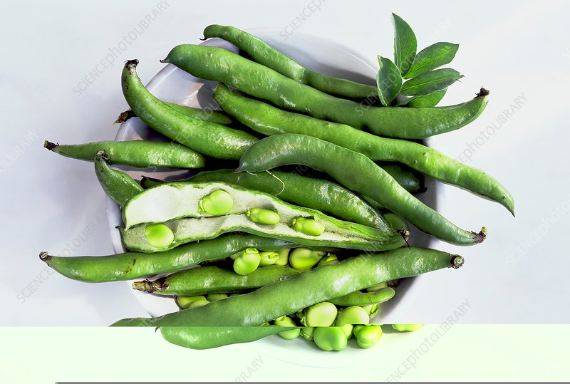 Bowl of broad beans