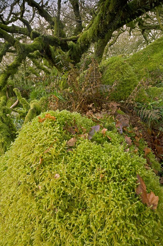 Moss-covered woodland