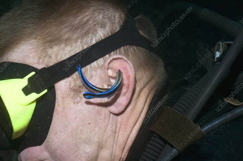 Cleaner wrasse cleaning a diver's ear
