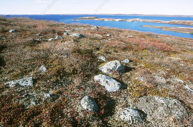 Canadian Shield Rock