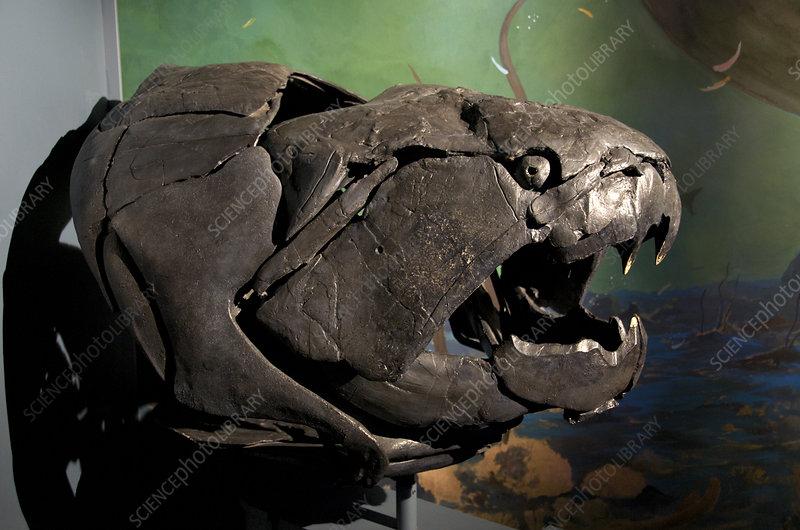 Dunkleosteus, a Devonian Fish