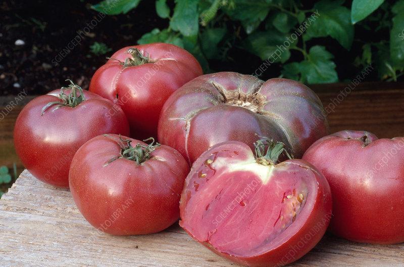 Cherokee Purple Tomatoes