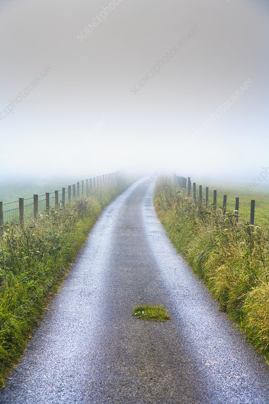 Countryside lane on a misty morning